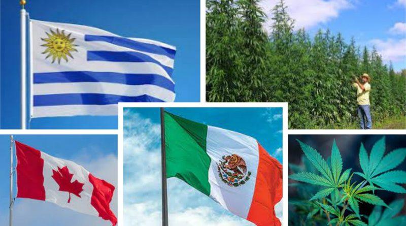 México es el tercer país del mundo en legalizar el uso medicinal y lúdico del consumo de marihuana