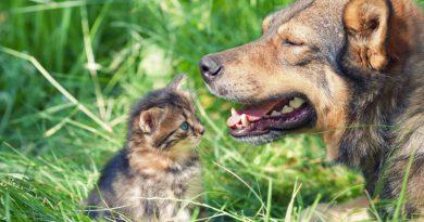 Casa de Salud de Nanacatlán esterilizará gratuitamente a perros y gatos este martes 1 de Junio.